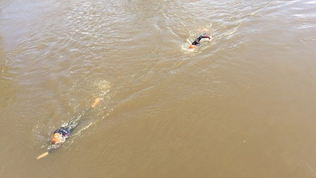 Two swimmers doing front crawl in the River Arun