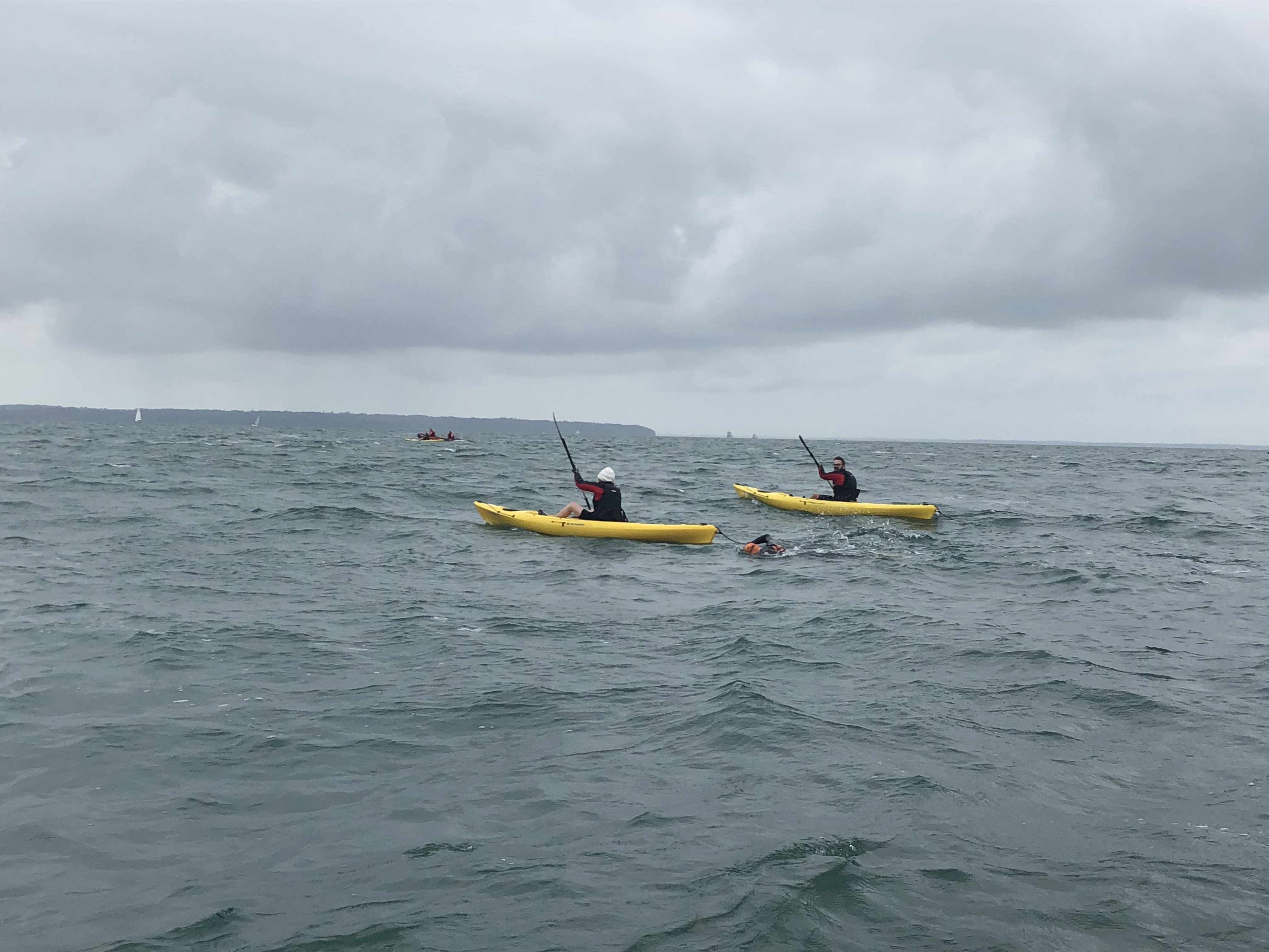 Billy swimming with a kayaker in front and another alongside