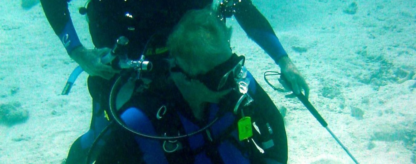 Mike scuba diving in his wheelchair with a friend